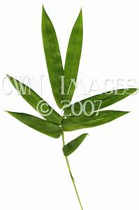 CWN Images - bamboo stock photos, stock images, stock ...