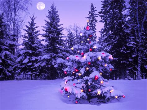 christmas tree out in the snow christmas graphics99 com