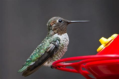 how to keep ants away from hummingbird feeder 7 ways to keep bees away from hummingbird feeders