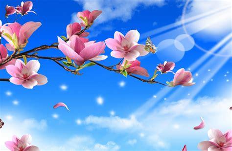Primavera 4k Wallpapers by Flowers On Sun 4k Ultra Hd Wallpaper 4k Wallpaper