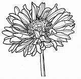 Line Flowers Drawing Flower Drawings Dahlia Zinnia Coloring Yahoo Single Bestcoloringpagesforkids Clipartmag Nature Collect Dahlias Chrysanthemum Later Visit Results Tattoos sketch template