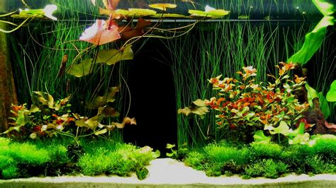 home interior designing software 33 attractive aquarium background technosamrat