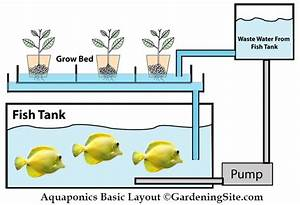 Diy Aquaponics For A Sustainable Food Source
