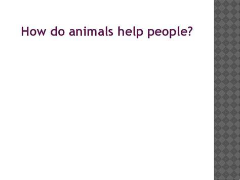 how do animals help humans презентация по английскому языку по теме quot how do animals help people 4 класс