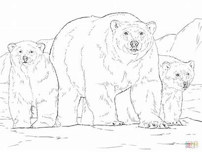 Polar Bear Coloring Cubs Pages Bears Cub