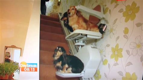 dogs dachshunds on stairlift daybreak itv1