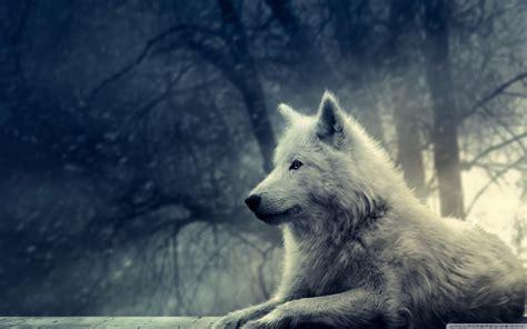 white wolf painting  hd desktop wallpaper   ultra