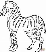 Zebra Coloring Pages Print sketch template