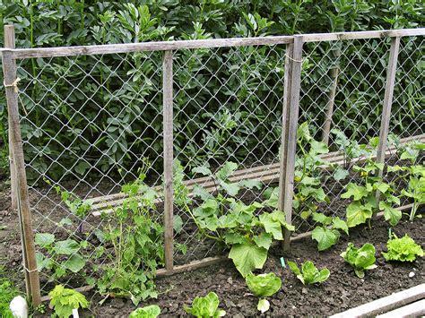 comment cuisiner les concombres comment semer des concombres détente jardin