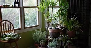 The 9 Best Indoor Plants To Buy In 2020