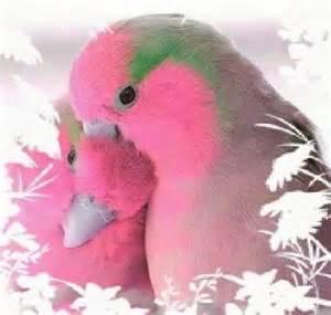 Beautiful Love Birds
