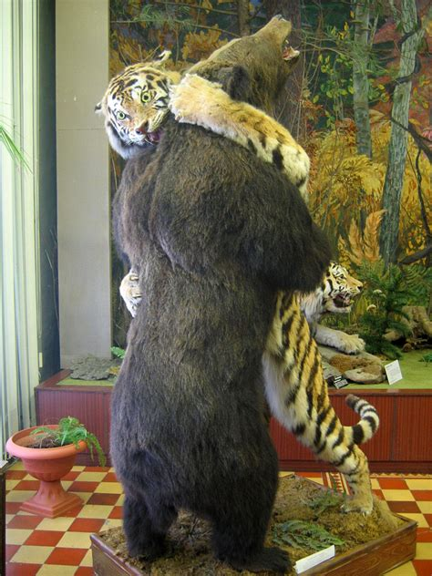 Filetiger And Bearnev Regional History Museum