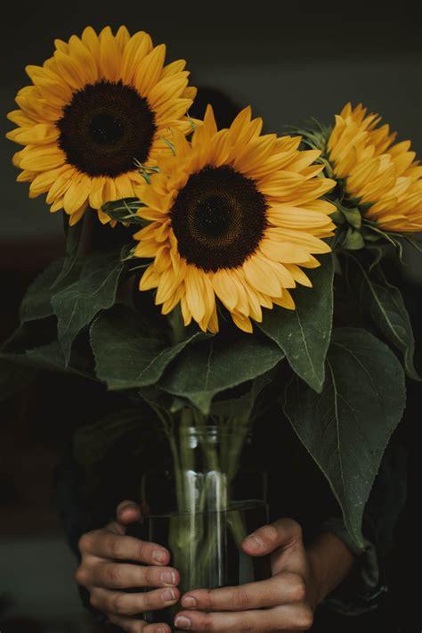 stock photo  flower nature sunflower