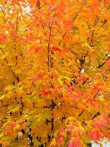 I love the changing of the leaves! | Autumn | Autumn ...