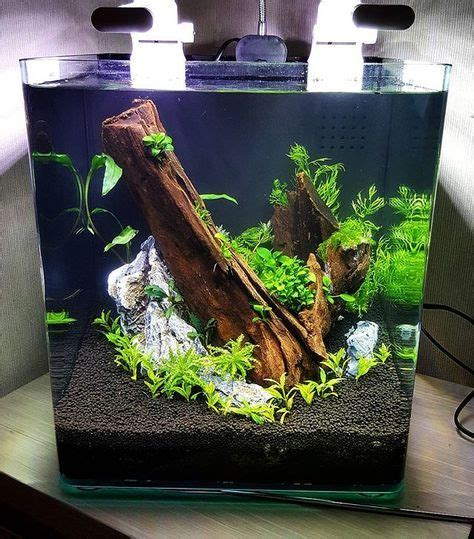 Betta Aquascape by Aquascape Betta Aquarium Betta Aquarium A Betta Fish Tank
