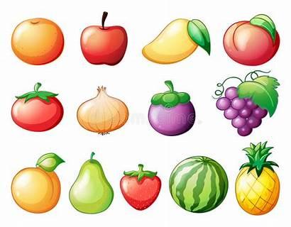 Fruits Vector Different Kinds Illustration Fruit Cartoon