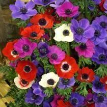 Quand Planter Des Dahlias : quand planter les dahlias et glaieuls l 39 atelier des fleurs ~ Nature-et-papiers.com Idées de Décoration