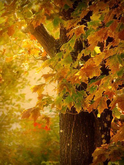 Autumn Leaves Inspirations