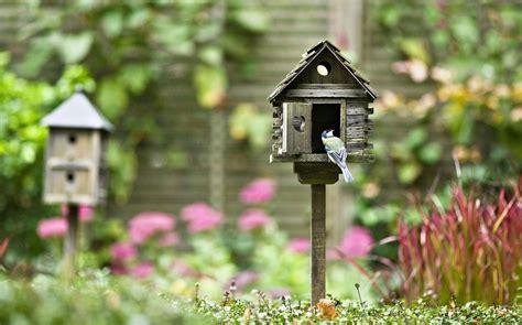 garden  airbnb  nesting birds