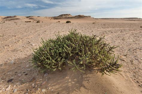 desert plants desert plants related keywords desert plants long tail keywords keywordsking
