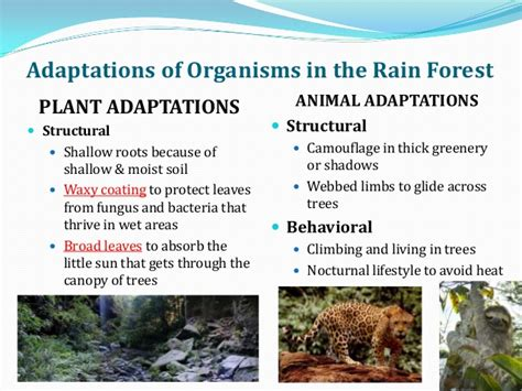 Adaptations in different biomes notes