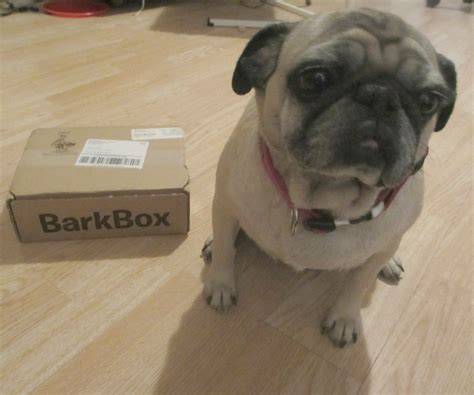barkbox monthly subscription box  dogs review