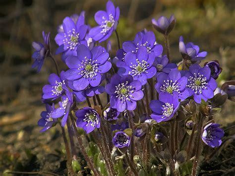 tips budidaya bunga violet tukang taman jogja