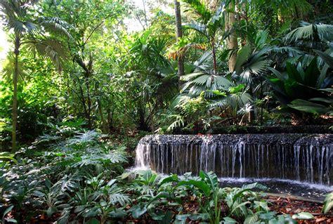 singapore botanic gardens the intercontinental gardener strolling through steamy