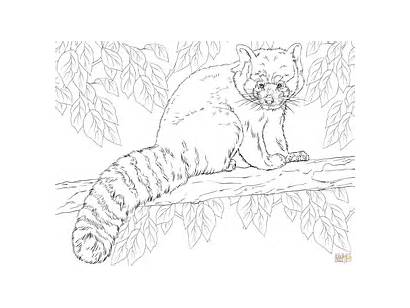 Panda Coloring Pages Branch Sitting Realistic Printable