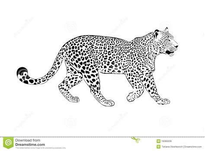 leopard illustration   white stock illustration