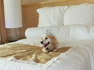 Hotel Pour Chien : autriche un h tel de luxe propose des chambres pour les ~ Nature-et-papiers.com Idées de Décoration