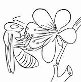 Honey Bees Colouring Bee Coloring Pages Clip sketch template