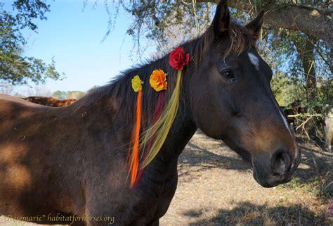 companion horse rosemarie horses reese habitatforhorses