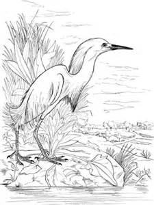 snowy egret   lake coloring page supercoloringcom