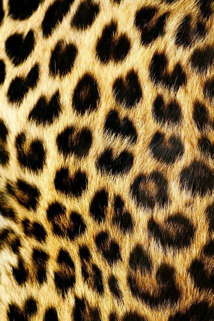 Leopard Animal Print Wallpaper - best 25 leopard print background ideas on