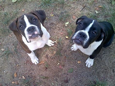 Baby Boxers Photograph By Shannon Keavy