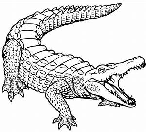 Alligator black and white alligator outline clipart ...