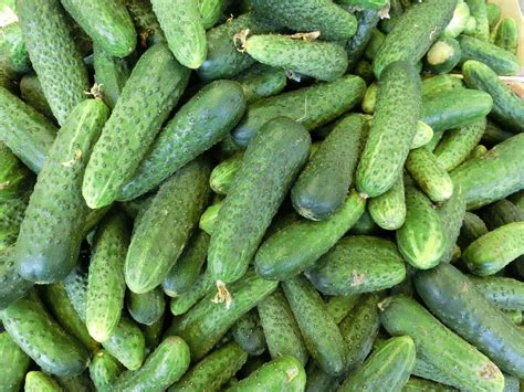 cucumbers health benefits nutrition natural remedies