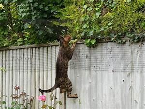 katzennetz katzennetz ohne bohren katzennetz balkon With katzennetz balkon mit liegenauflage sun garden