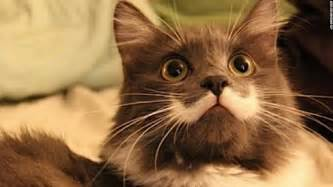 what to before getting a cat 11 interesting facts about cats probably you ve never