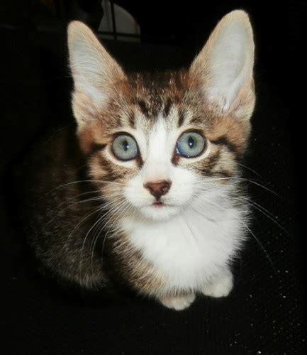eyes born kittens why copley jennifer kitten updated last cats