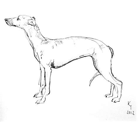 foto de italian greyhound drawings Gallery