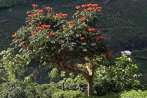 Tulpenbaum Foto Bild North America Central America