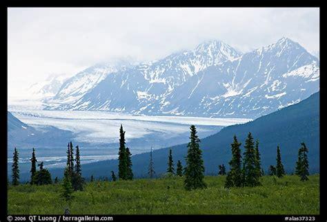 picturephoto spruce trees glacier  chugatch