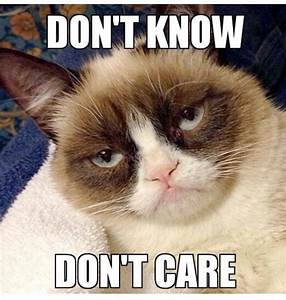 26 best images about Grumpy Cat memes on Pinterest ...