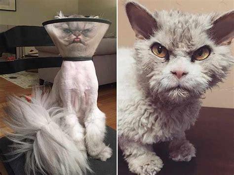 angry cats  plotting  kill  angry cats