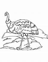 Coloring Emu Australian Printable Colouring Bestcoloringpages sketch template