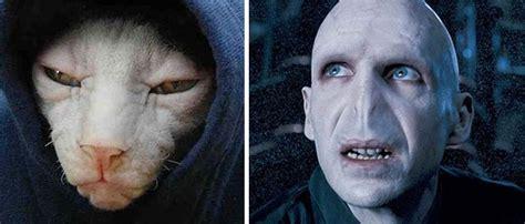 cats  freakishly resemble