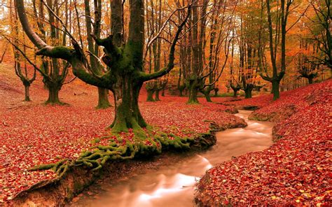 Fall Desktop Backgrounds by Free Autumn Desktop Wallpaper Backgrounds Wallpaper Cave