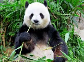 Banking Trojan Zeus Panda shambles into Brazil ahead of ...